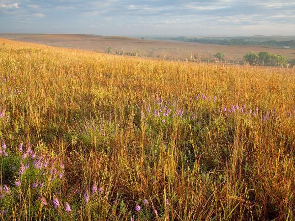 preservation of the tallgrass prairie