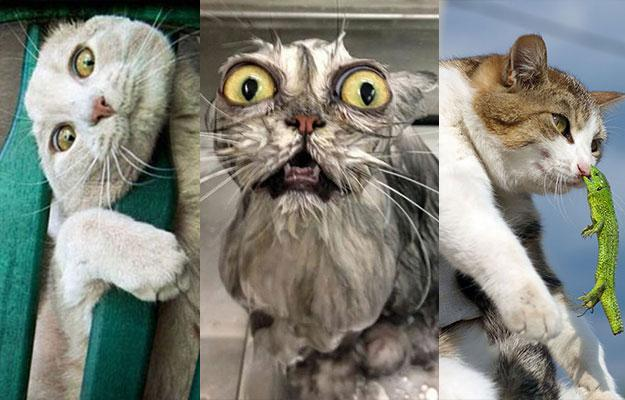 Cute Cats From Around ...